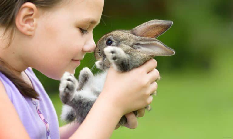 conejo en manos de niña