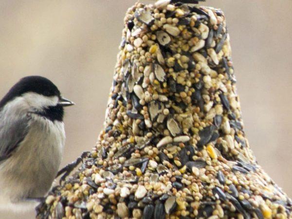 Comida para pájaros: ¿Cuál es la mejor del 2020?