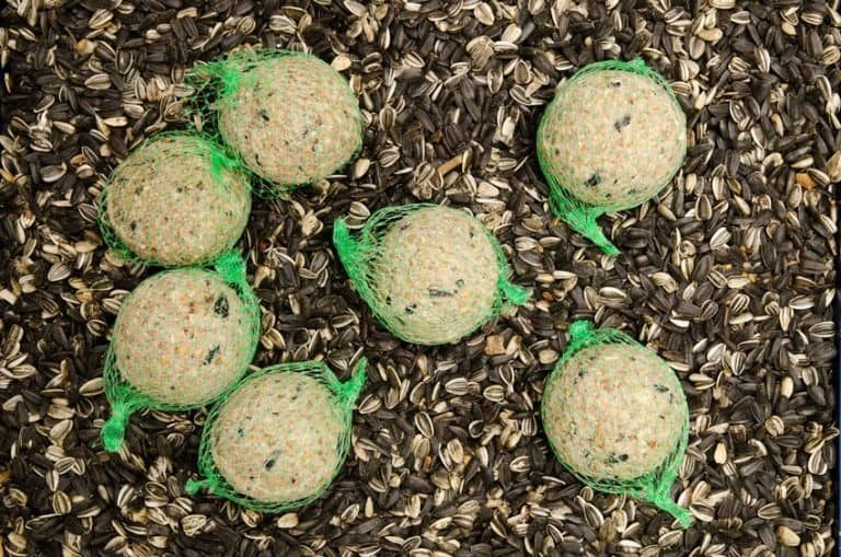 Comida en bolitas y semillas sueltas