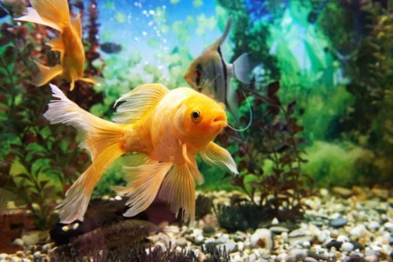 Ambientación tropical para peces