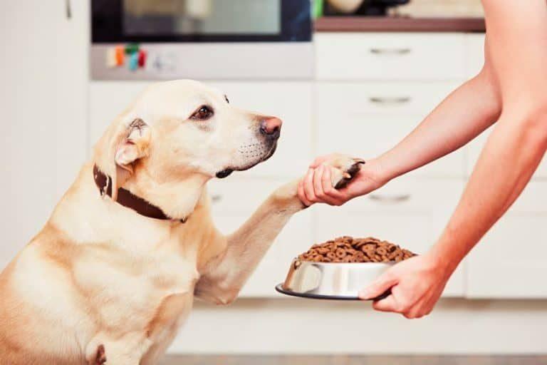 Mascota recibiendo su comida