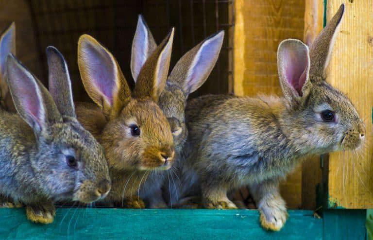 Conejos en varios colores