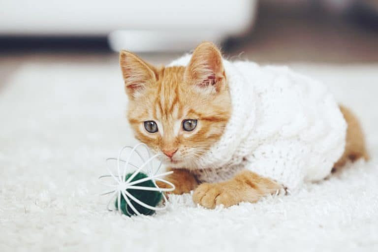 Gato jugando en la alfombra