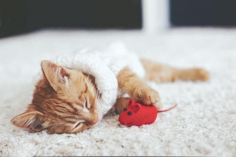 Gato jugando con un raton rojo
