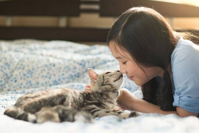 Niña jugando con un gato de rallas
