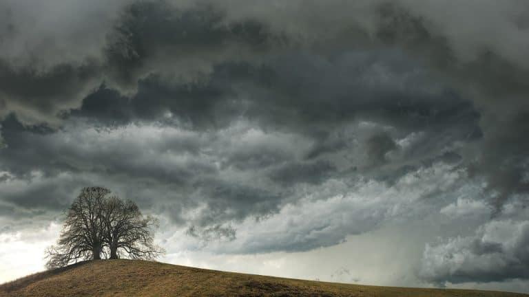 Un árbol en medio de una tormenta