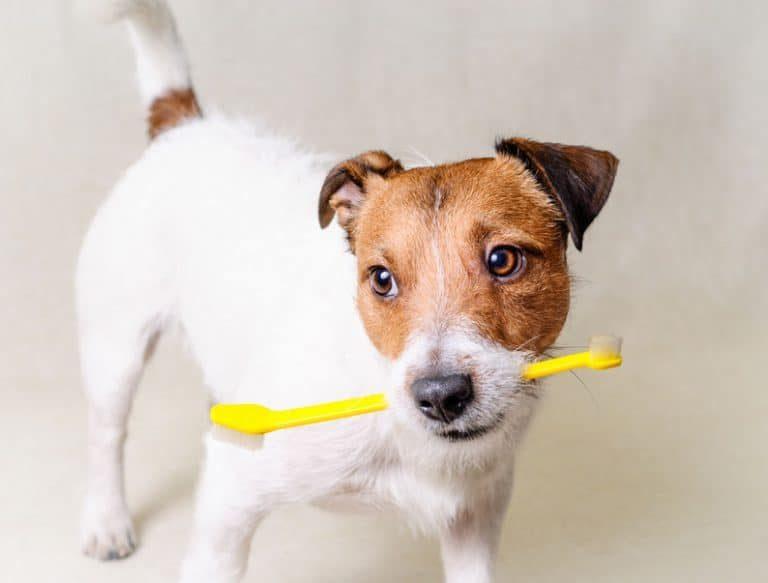 Pasta de diente para perro