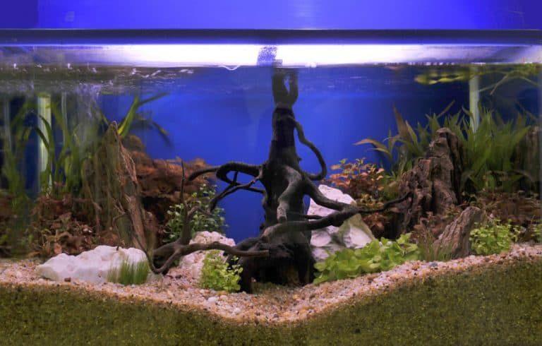 Árbol dentro de acuario