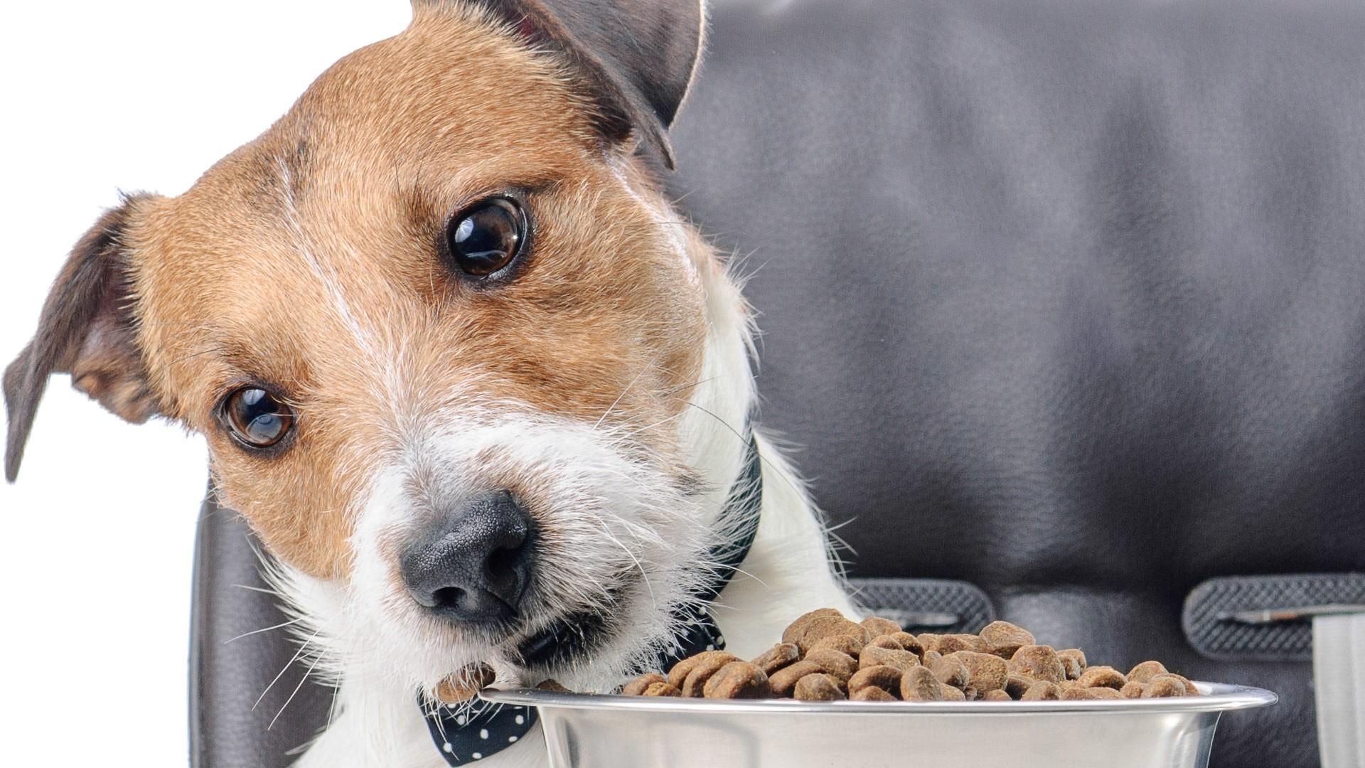 Dieta baja en purinas para perros