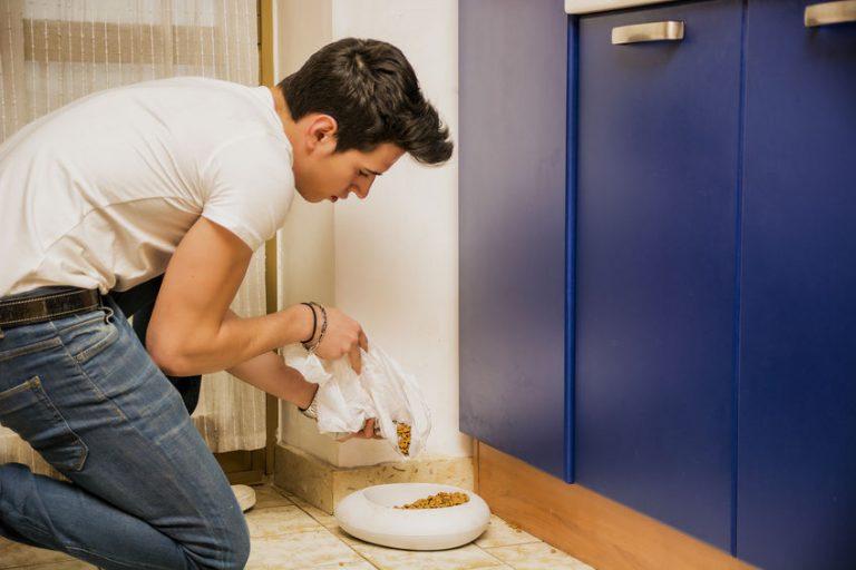 Plato para comida de perro blanco