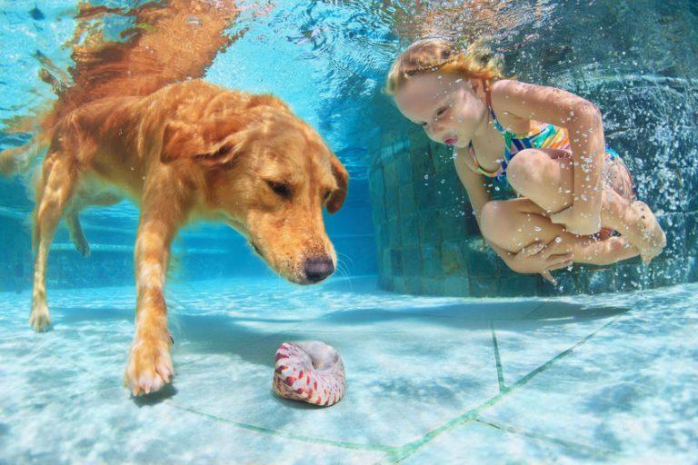 Un perro y una niña en el agua