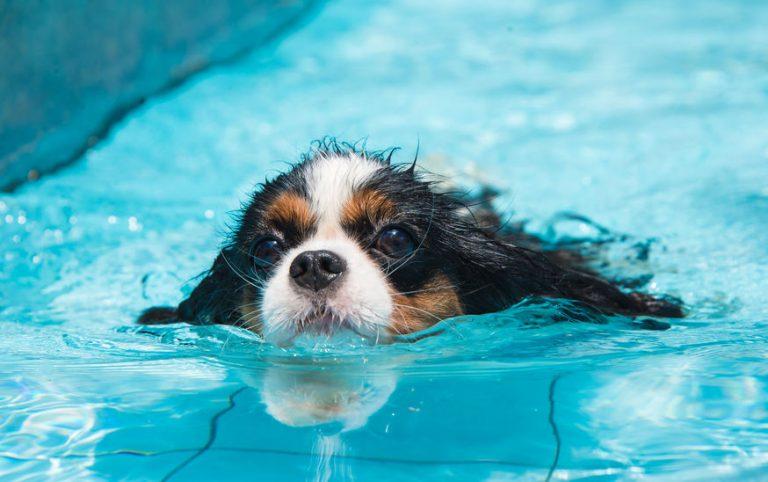 Un perro nadando en el agua