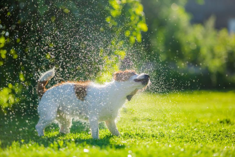Un perro secándose