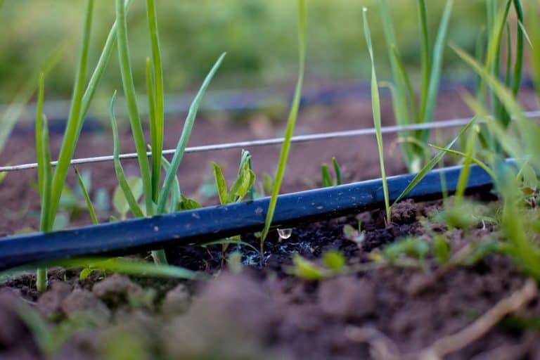 Riego por goteo en un jardín