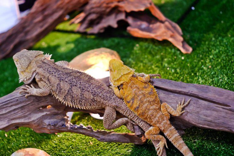 Reptiles sobre tronco