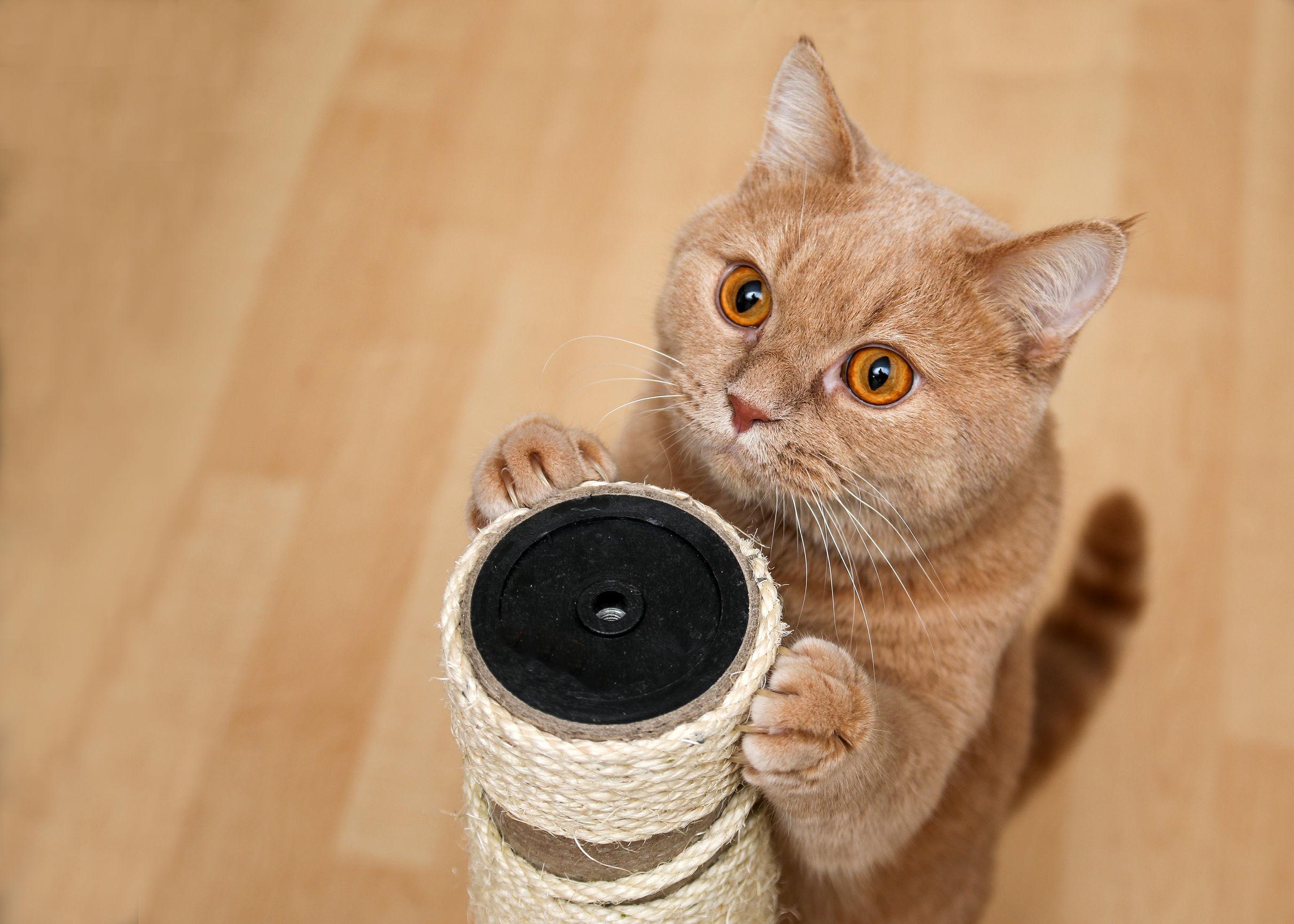 Rascador para gato