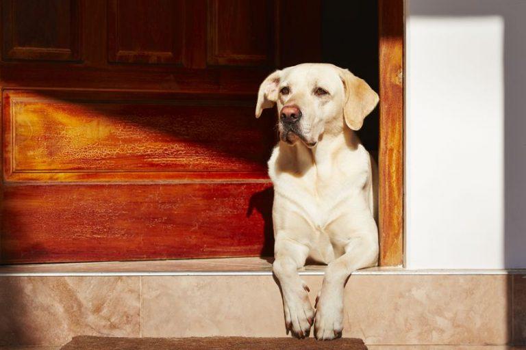 Perrito esperando afuera