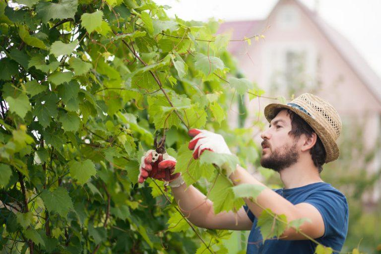 Hombre cortando plantas