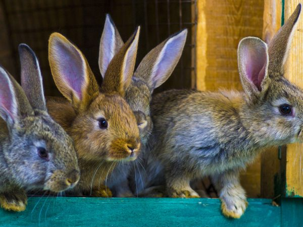 Juguetes para conejo