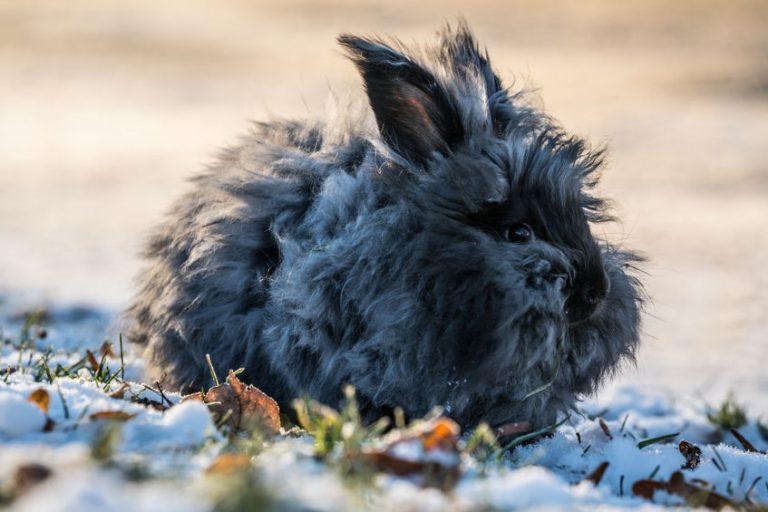 Conejo negro