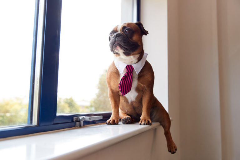 Perro en la ventana