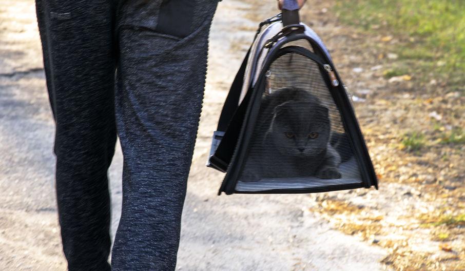 gato en bolso