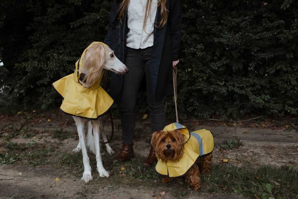 chubasquero para perros amarillo