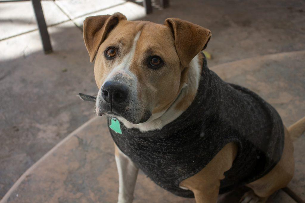 perro con abrigo y collar