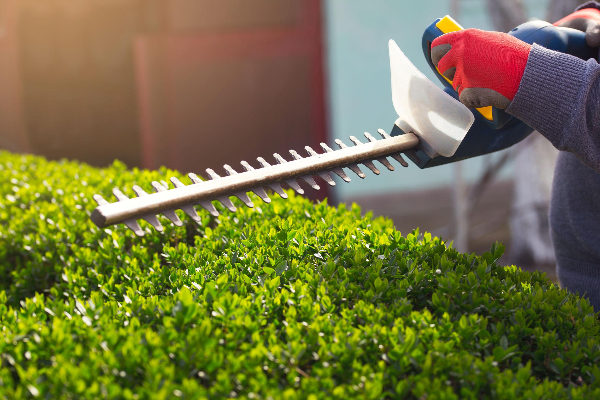 recortando arbustos de jardin