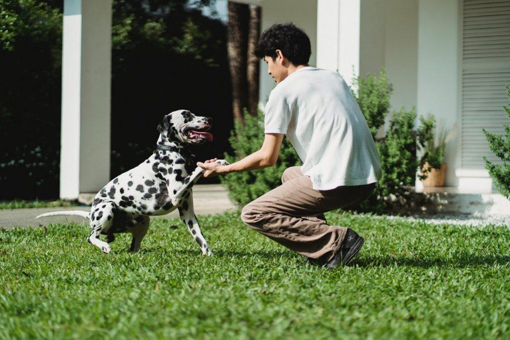 perro jugando con su dueño
