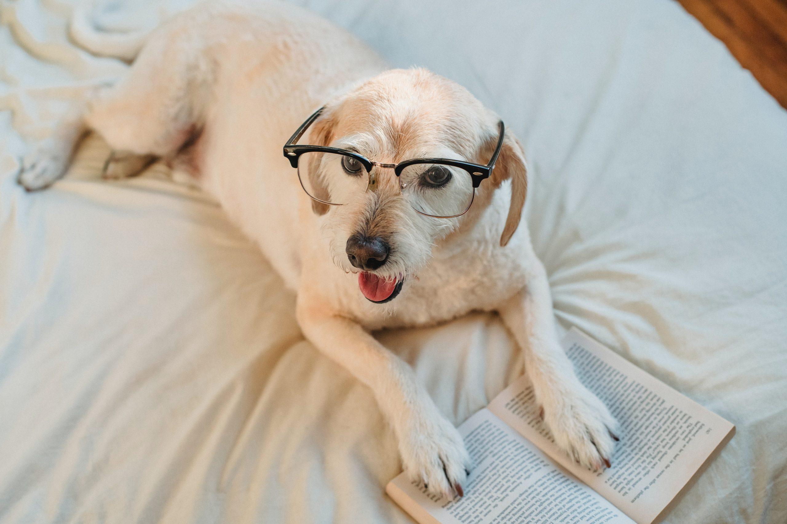 perrito con lentes