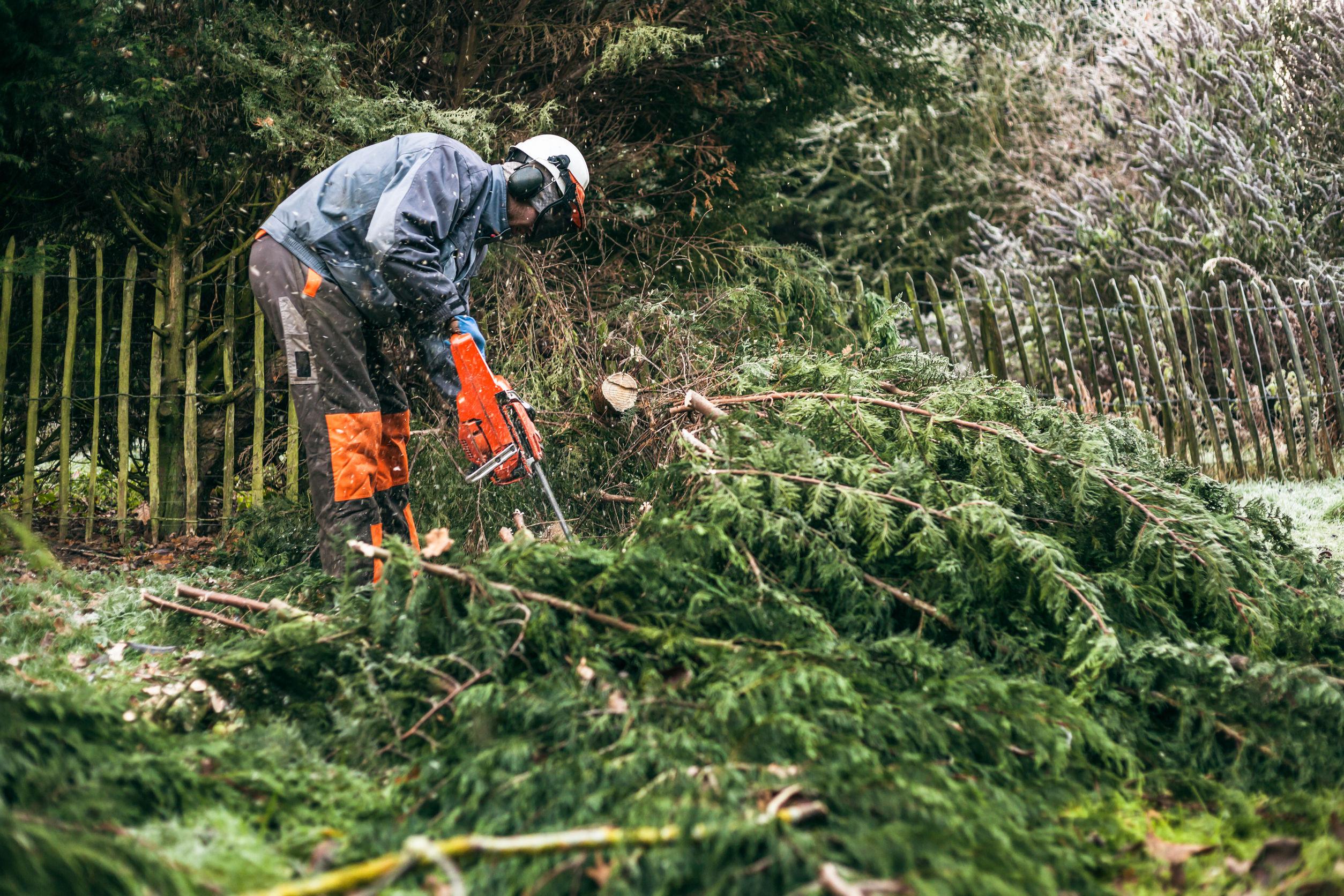 Trabajador podando arbustos