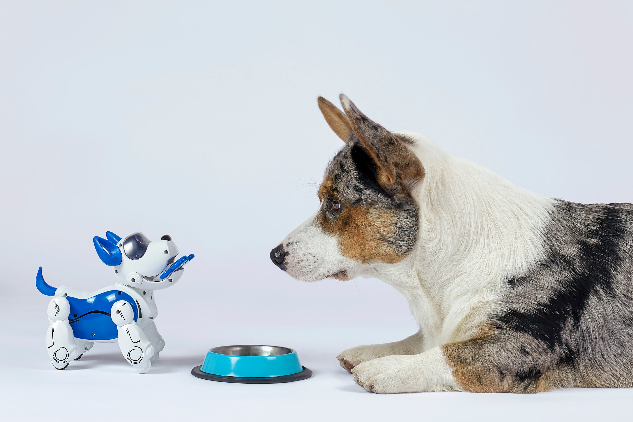 Perro real mirando a perro interactivo