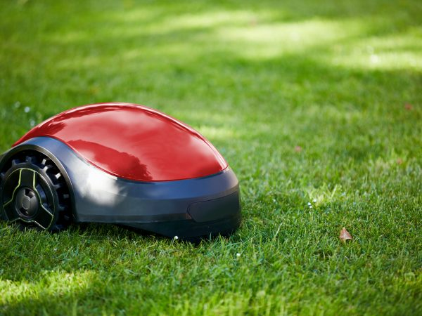 Robot lawn mower on summer meadow in the garden with copy space