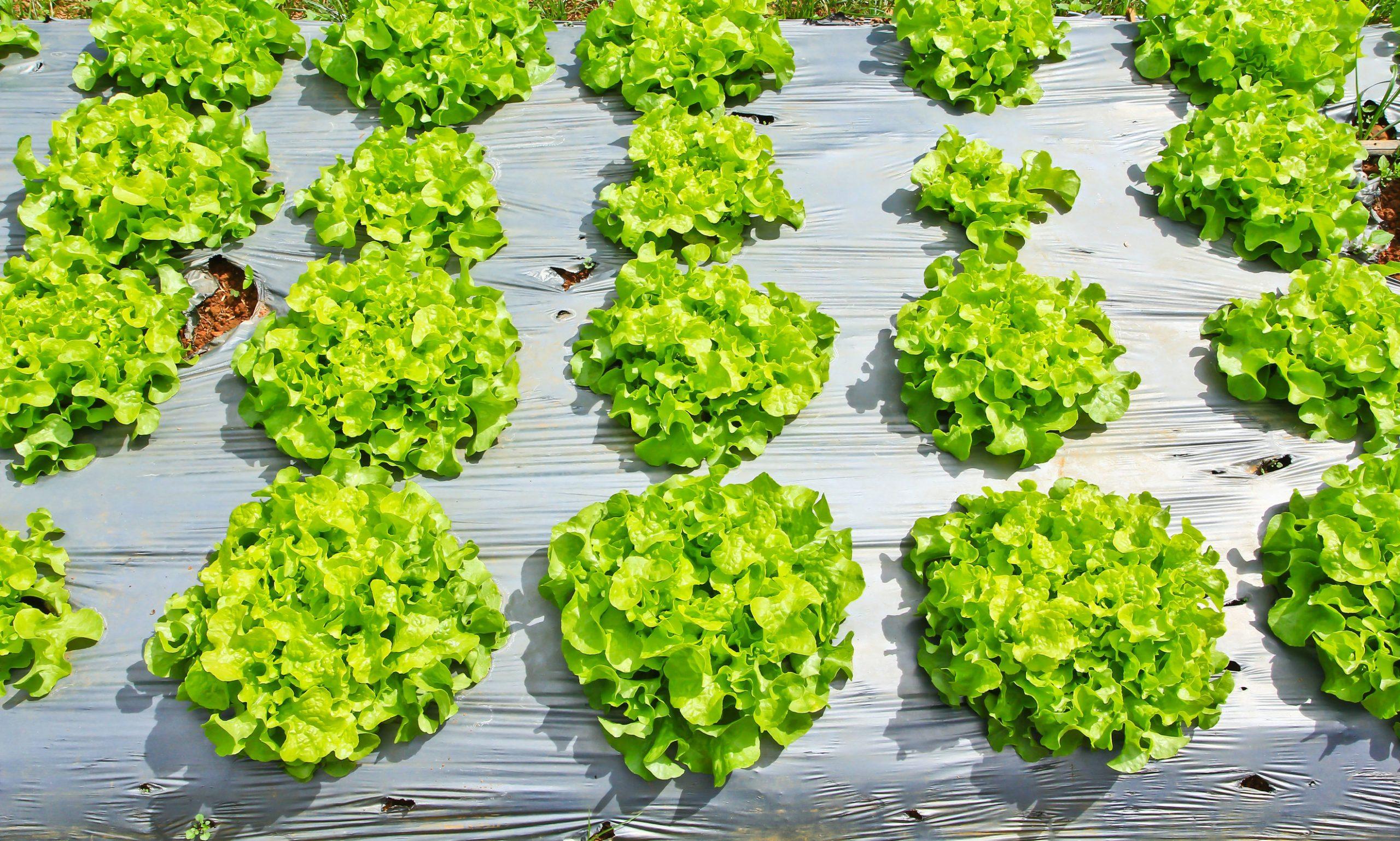 malla con vegetales