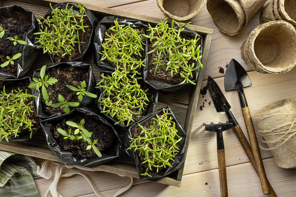 Las bolsas de cultivo son prácticas para el campo o espacios cerrado con mejores resultados que una maceta.