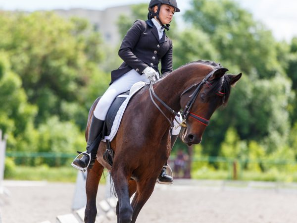 Young female horse rider on equestrian sport competition.