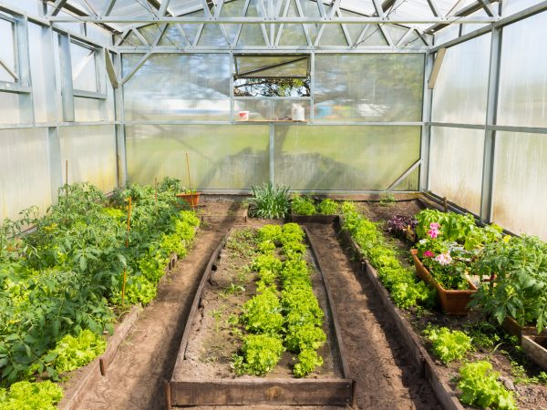 Small greenhouse with tomatoes and lettuce