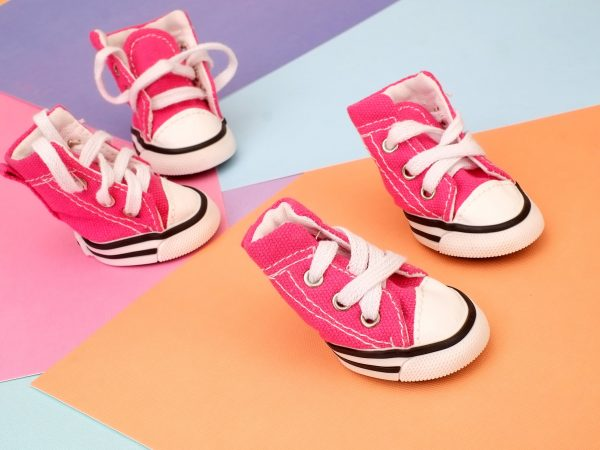 Funny pink sneakers for little dogs on colour background